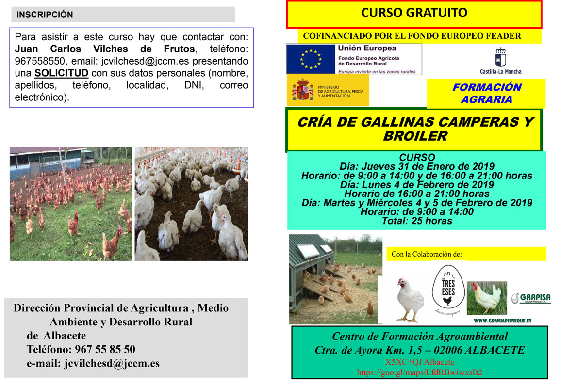 Gallinas Camperas 1